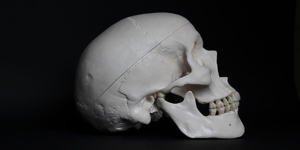 human skull on a black background