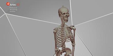 bannière de modèle 3D de squelette humain à télécharger gratuitement